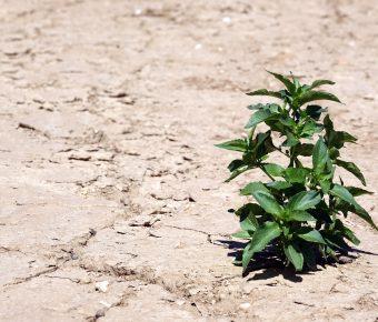 Umsatzsteigerung-Dürre